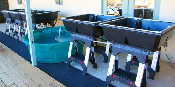 The FFGS-50 all plumbed out and ready for fish and plants.