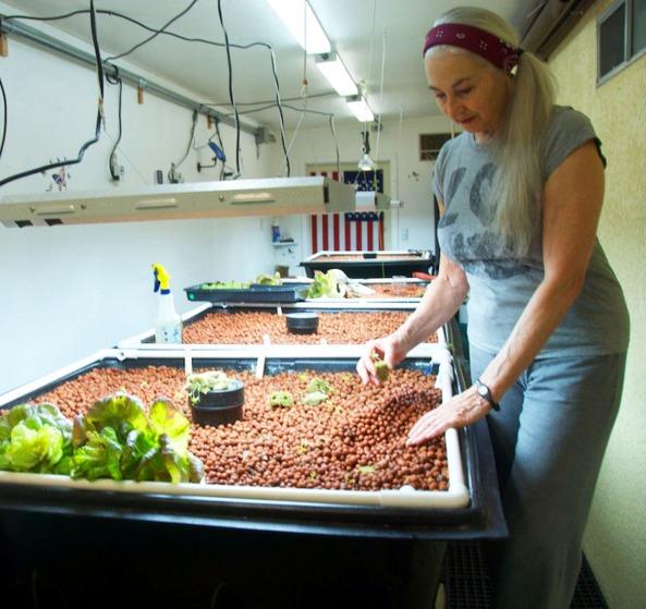 Grace plants seedlings in Grow Bed #1