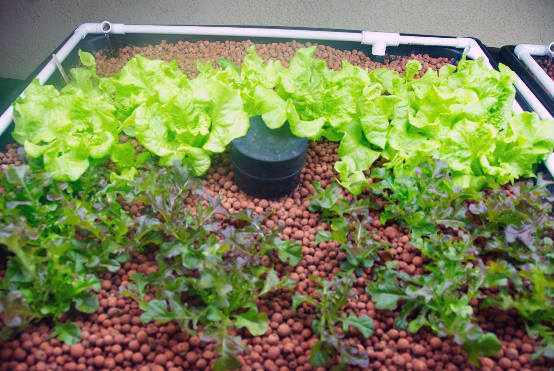 Hydroponics tart ma community google for Hydroponic grow bed