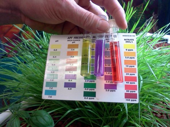 Testing the Water Quality using the Kit that's included with a Food Forever™ Growing System