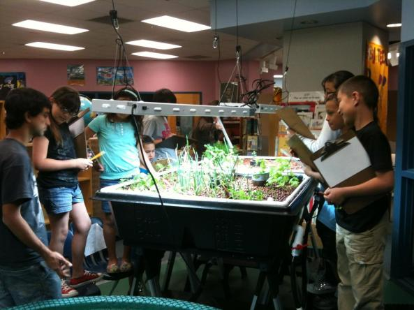 Davis Bilingual Elementary School students gather around Aquaponics USA Grow Beds