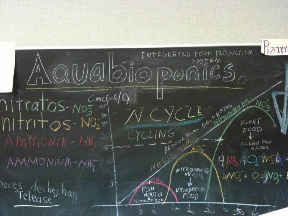 Blackboard shows the Nitrogen Cycle of an Aquaponics System