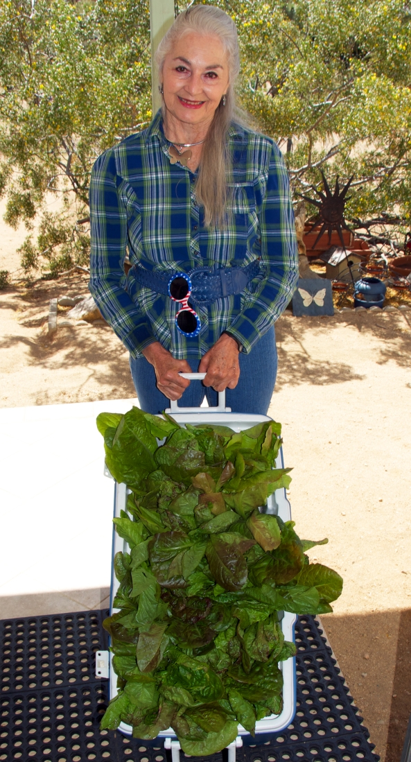Grace with Cooler Full of Chef's Special Living Romaine Lettuce
