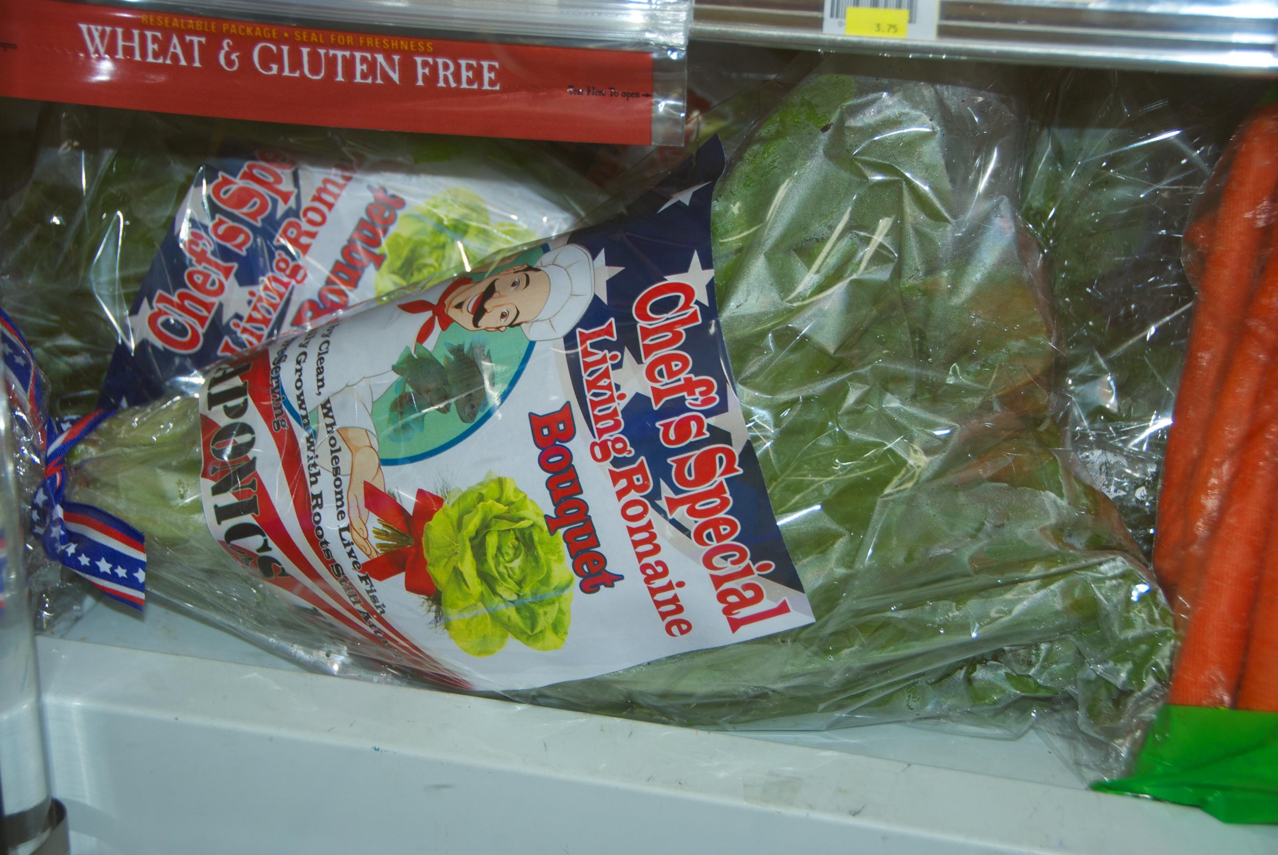 Chef's Special Living Romaine Lettuce in Sue's Cooler
