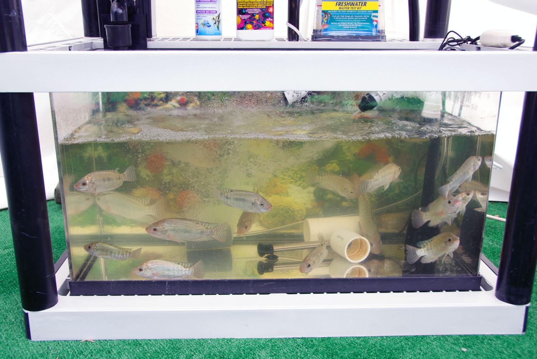 Aquarium fish tank automatic fish feeder - It S