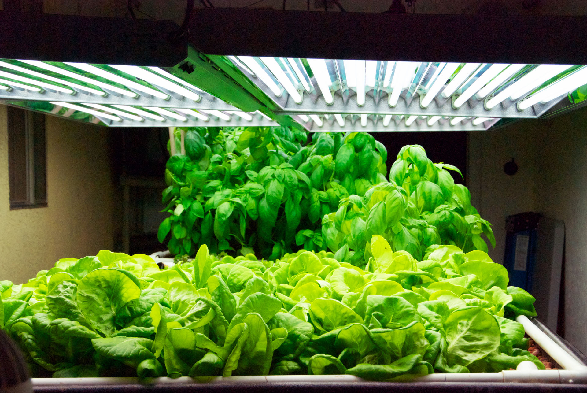 An 11 sq. ft. Grow Bed full of butter lettuce flanked by Basil.